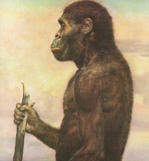 An artistic representation of Australopithecus africanus. The Australopithecines may have been responsible for the deposits in Olduvai Gorge and Koobi Fora in East Africa. They may also have begun the long process of 'becoming human'.